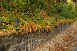 Autumn forest park with old street lighting lantern is framed by beautiful inflorescence of autumn garden or wild grapes.
