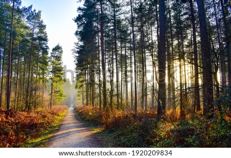 Autumn forest path in morning. Forest path way. Forest pathway. Path in forest