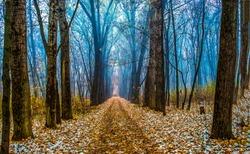 Autumn forest path landscape