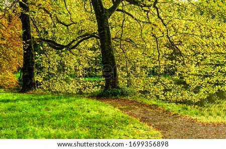 Autumn forest path tree trunks. Autumn forest scene. Autumn in forest. Autumn forest pathway