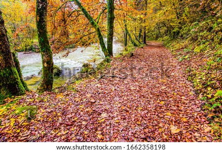 Autumn forest path way view. Autumn forest road view
