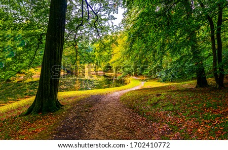Autumn forest pathway. Path in autumn forest. Autumn forest path landscape