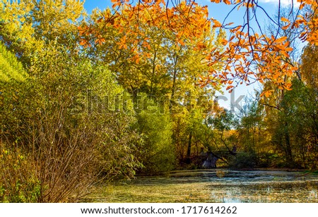 Autumn forest pond tree branches