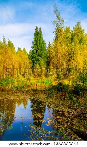 Autumn forest pond view. Autumn forrest pond view. Autumn forest pond scene. Autumn forrest pond