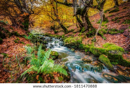 Autumn forest river creek flow. Forest creek in autumn. Autumn creek in forest. Autumn forest creek flowing