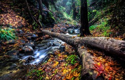 Autumn forest river creek flowing. Cold creek in autumn forest. Autumn cold creek. River creek in autumn forest