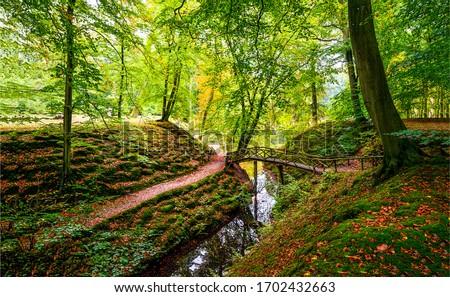 Photo of  Autumn forest river creek landscape. Forest creek in autumn. Autumn forest creek view