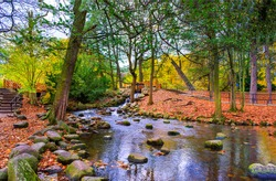 Autumn forest river creek landscape. River creek in autumn park. Autumn park river creek