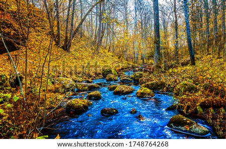 Autumn forest river creek view