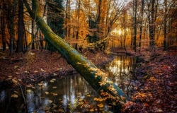 Autumn forest river creek view. Creek in autumn forest sunset. Autumn water in forest