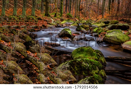 Autumn forest river creek view. Forest creek in autumn. Autumn creek in autumnal forest