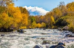 Autumn forest river rapids view. River rapids in autumn