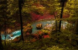 Autumn forest river stream. River in autumn forest. Autumn forest river. Autumn river flow