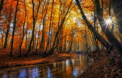 Autumn forest river sunbeam scene. Sunbeam in autumn forest. Forest river creek in autumn fall. Autumn fall forest river landscape