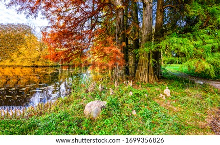 Autumn forest river trees view. Forest river trees in autumn season