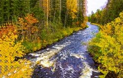 Autumn forest river wild landscape. Forest river wild in autumn. Autumn forest river. Forest river wild in autumn