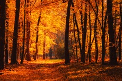 Autumn forest road at warm fall day