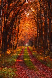 Autumn forest road at warm sunny fall morning