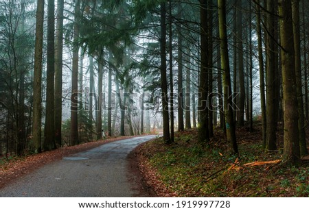 Autumn forest road in mist. Forest road trail. Misty forest road. Road in misty forest