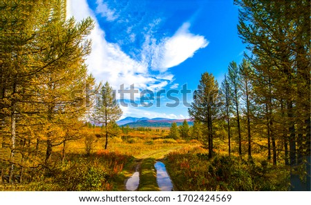 Autumn forest road in sunny day. Autumn nature forest. Autumn forest landscape. Autumn wilderness landscape