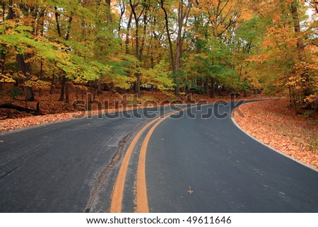 autumn forest road, leavs are falling on the road