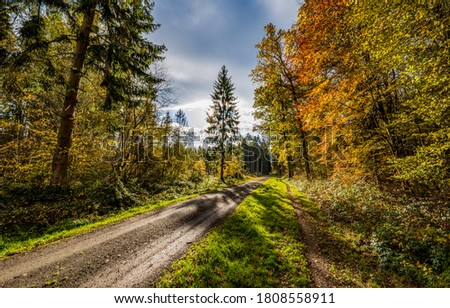 Autumn forest road sunlight shadows. Road in autumn forest