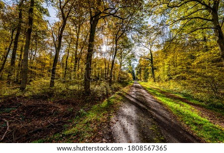 Autumn forest road sunlight view. Road in autumn forest. Autumn forest road