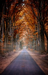 Autumn forest road view. Road in autumn forest. Autumn road view. Autumn forest road