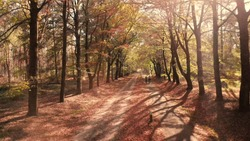 Autumn forest sand road and bike path with leaves and long shadows from the backlit lane on the floor and in the distance two persons on a bike approaching