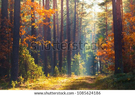 Autumn forest scene. Vivid morning in colorful forest with sun rays through trees. Gold foliage and footpath in autumn forest.