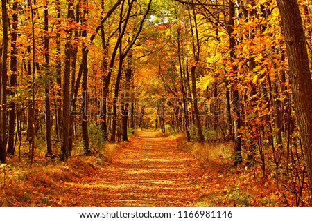Autumn forest scenery with road of fall leaves & warm light illumining the gold foliage. Footpath in scene autumn forest nature. Vivid october day in colorful forest, maple autumn trees road fall way