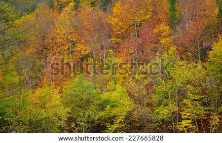 Autumn forest texture