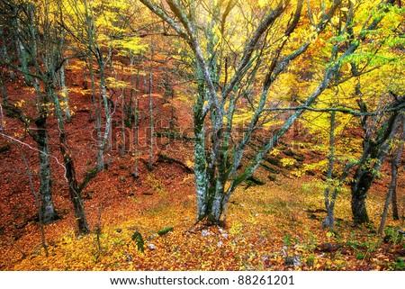 Autumn forest texture. Nature composition.