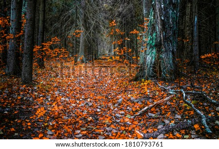 Autumn forest trail in woods. Autumn forest trail fall. Falling autumn leaves in autumn forest