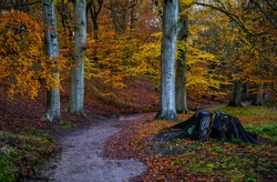 Autumn forest trail landscape. Autumn forest trail view. Trail in autumn forest. Forest trail in autumn forest