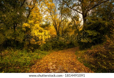 Autumn forest trail view. Autumn in forest. Forest in autumn