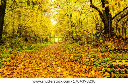 Autumn forest trail view. Forest trail in autumn. Autumn forest trail