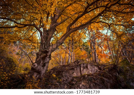 Autumn forest tree branches view. Autumn in forest. Forest in autumn. Autumn tree in forest