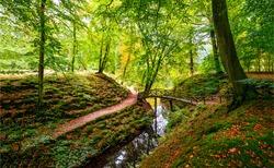 Autumn forest tree creek  streams landscape