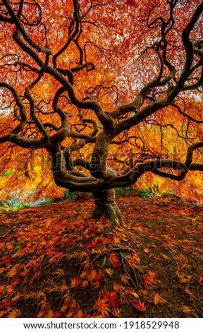 Autumn forest tree leaves fall. Autumn tree. Autumn fall tree. Tree in autumn