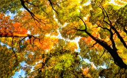 Autumn forest tree top background