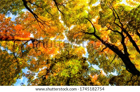 Autumn forest tree tops background. Tree tops in autumn. Autumn tree tops view