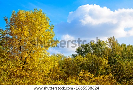 Autumn forest tree tops view