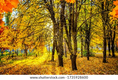 Autumn forest trees background. Autumn forest falling leaves