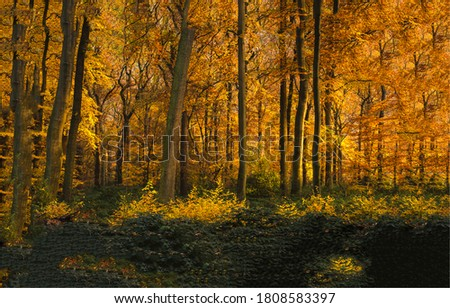 Autumn forest trees background. Autumn in forest