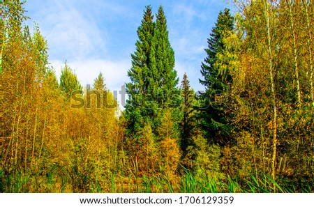 Autumn forest trees background view. Autumn forest trees. Autumn trees view