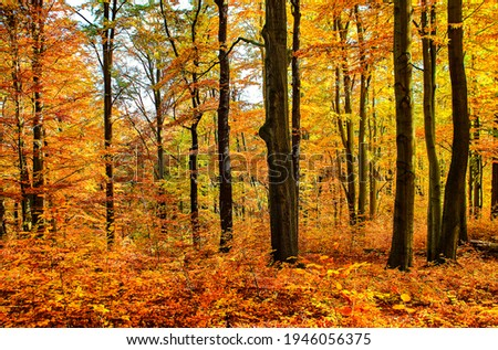 Autumn forest trees background view. Forest tree in autumn scene. Autumn forest trees view