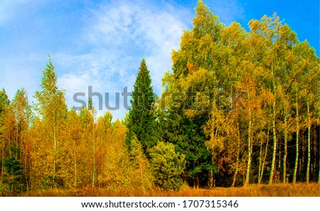 Autumn forest trees landscape. Forest in autumn season
