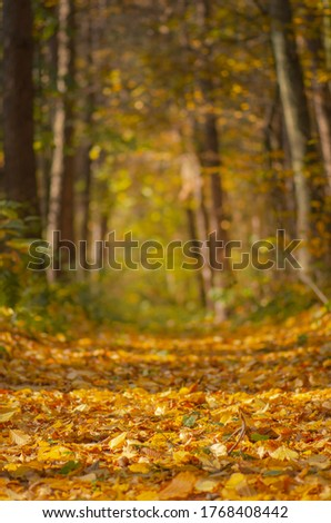 Autumn forest trees leaves and green grass. Botanical floral autumn backdrop. Autumn thanksgiving day backdrop.