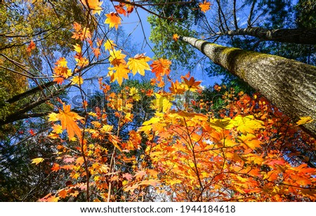 Autumn forest trees leaves view